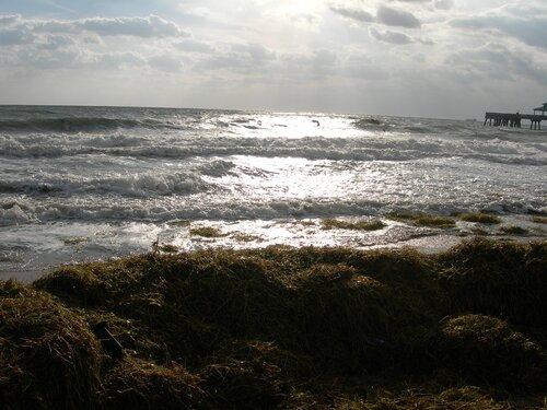 Атлантическая щедрость! После урагана Вилма во Флориде.