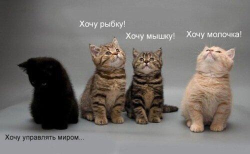 Котятки или дискриминация по цвету