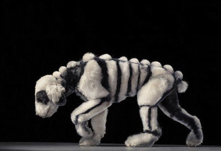 Собака / Dogs Gods by Tim Flach