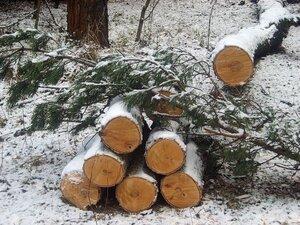 Скандал с вырубкой лесов под строительство газопровода «Сахалин - Хабаровск - Владивосток» продолжается