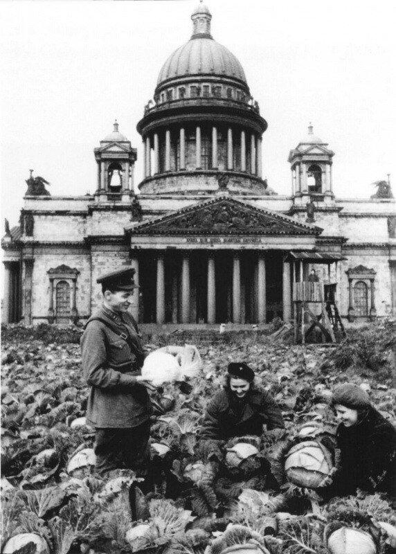 Сбор урожая капусты у Исаакиевского собора в Ленинграде.