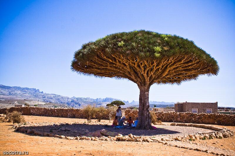 как девчата откуда на железных островах дерево гладит сиськи