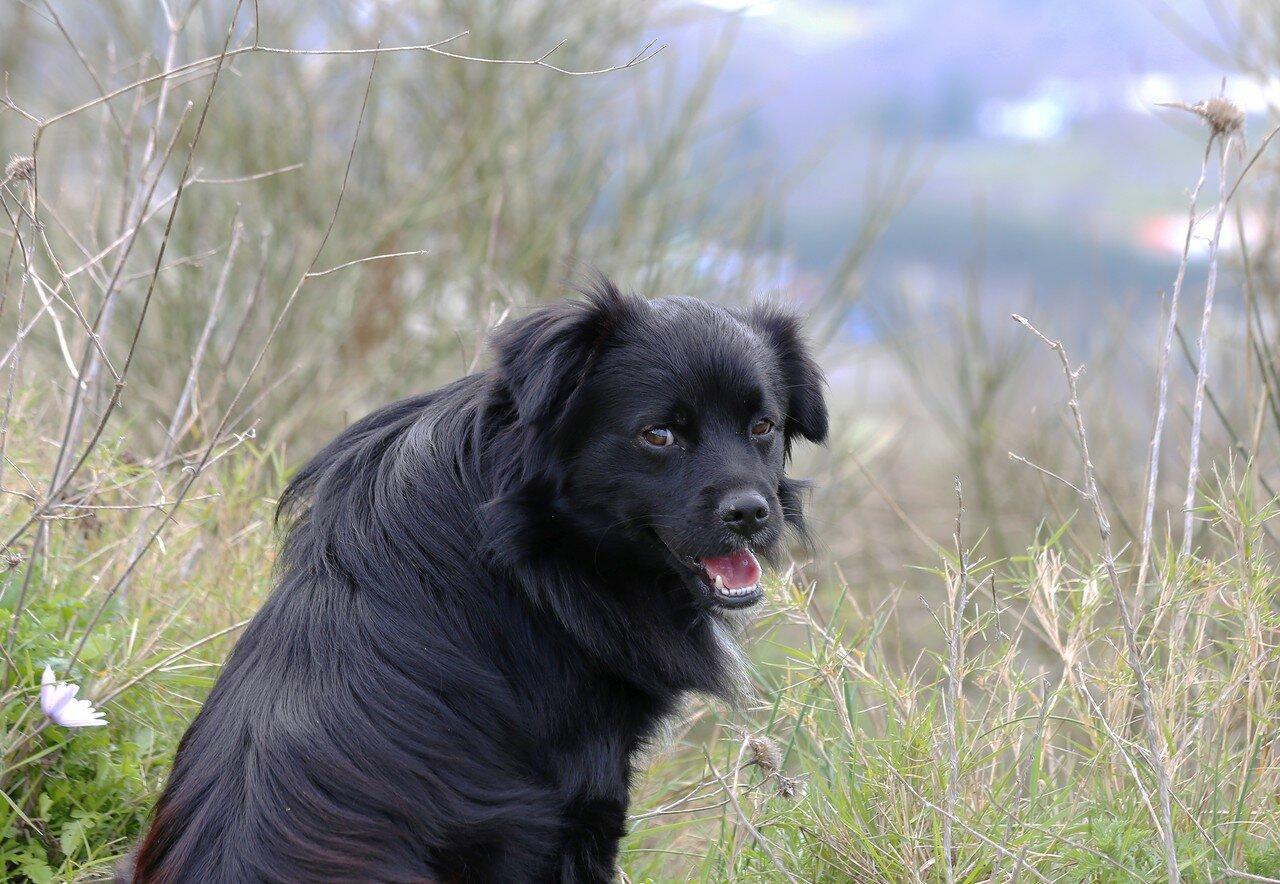Искья, гора Эпомео. Горный пастух