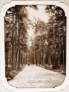 Вид одной из аллей парка, разбитого вокруг Беловежского дворца в 1895 г.