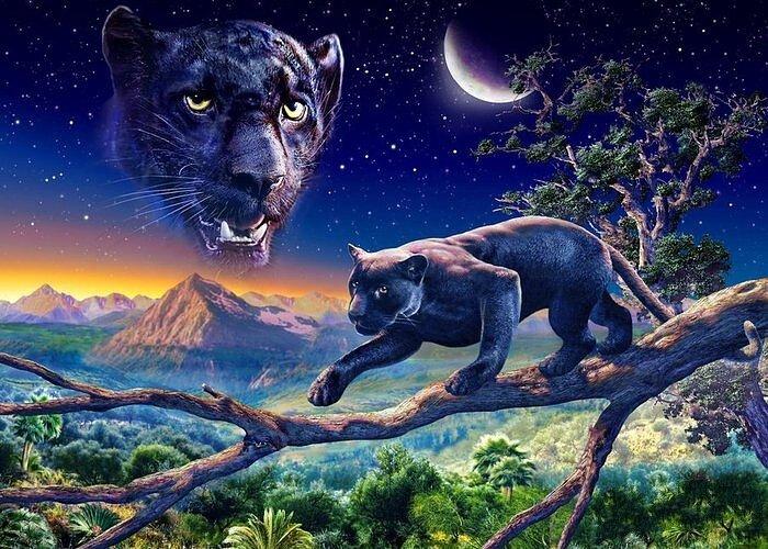 Скачать обои животные, черная пантера, сумерки, Adrian Chesterman 800x600.