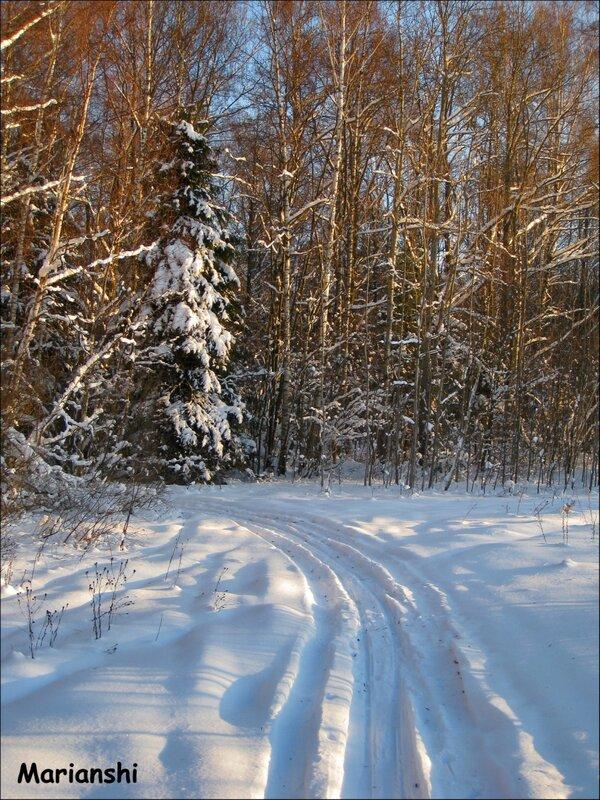 Вход в лес