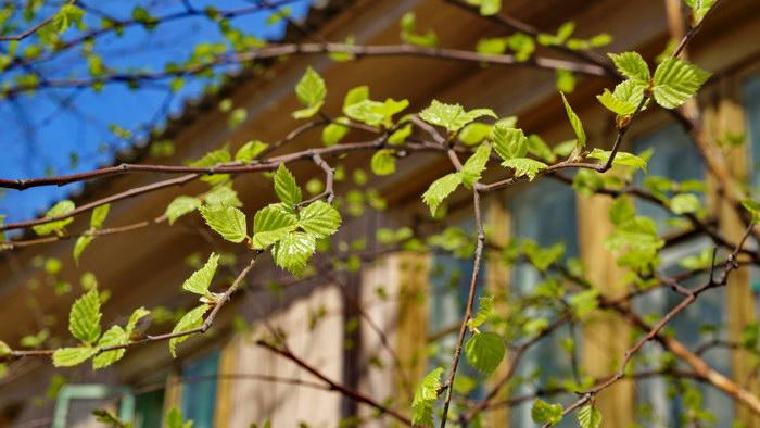 Весенний Томск. Фотопозитив