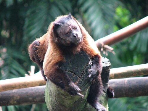 Singapore Zoo, Сингапурский зоопарк
