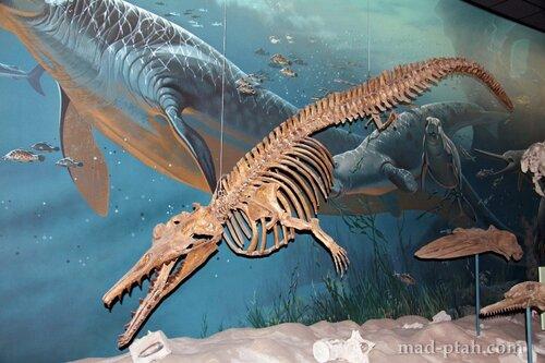 плавающий динозавр, музей естественной истории, вашингтон, сша