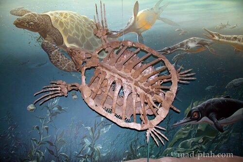 доисторическая черепаха, музей естественной истории, вашингтон, сша