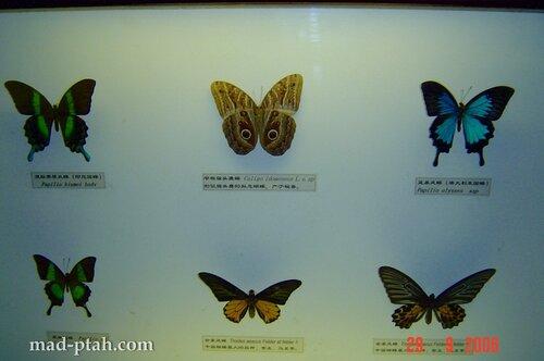 бабочки, музей бабочек, хайнань, китай