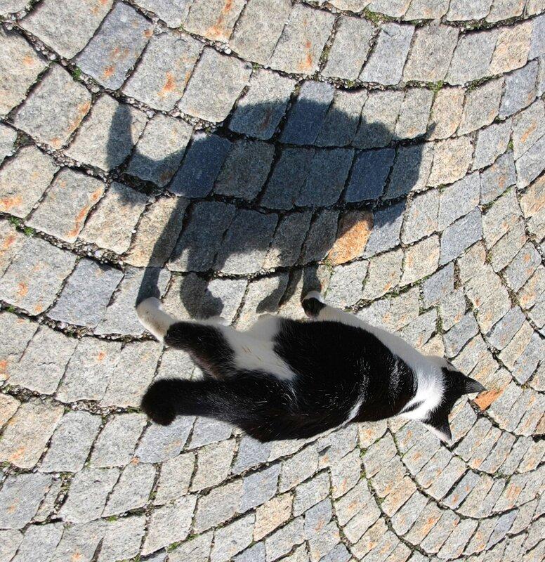Из жизни баварских кошек