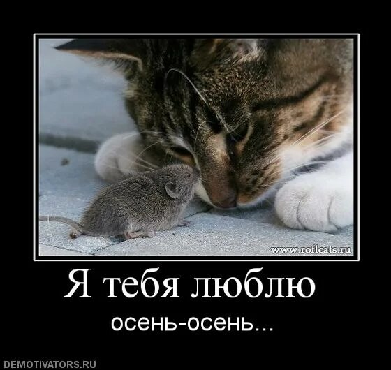 http://img-fotki.yandex.ru/get/4701/posmetnaia-el.c8/0_479b2_b68736f2_XL.jpg