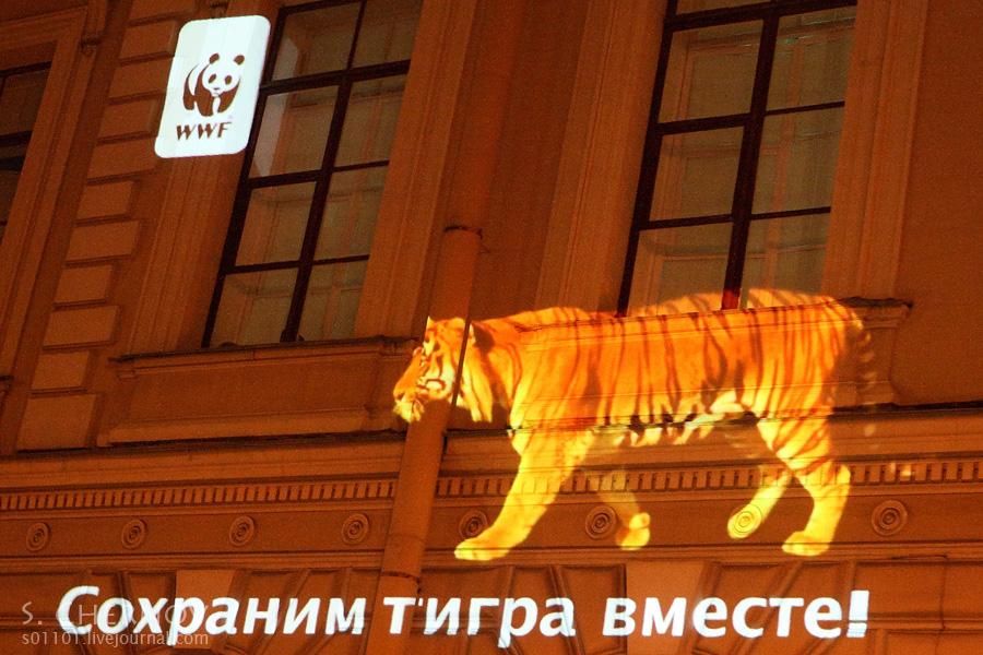 Тигры в городе