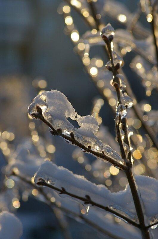 веточка во льду и в снегу-1