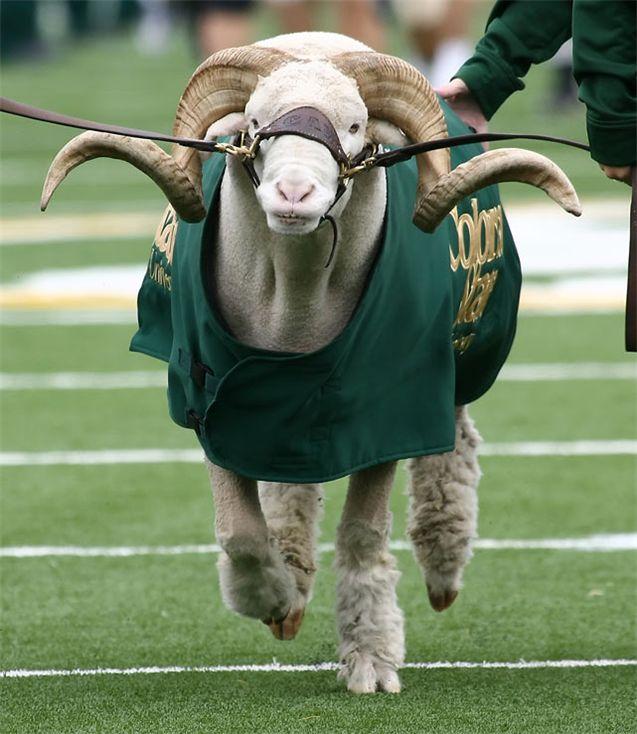 Живые талисманы в студенческом спорте / NCAA Top Real Animal Mascots - Cam The Ram / Colorado State