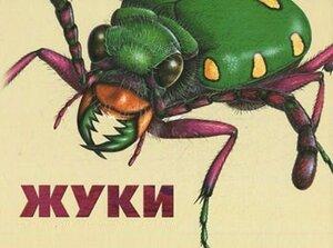 В домах Владивостока появились клопы и летающие тараканы