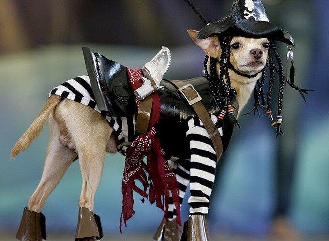 Square Park Dog Halloween Parad