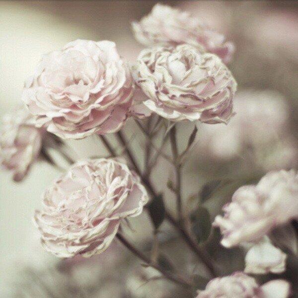 pphoto by .natasha.'s