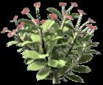 rose bush 3.png