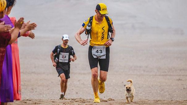 Организаторы марафона не разрешили Гоби (как назвали песика) больше участвовать в пробеге из-за пого