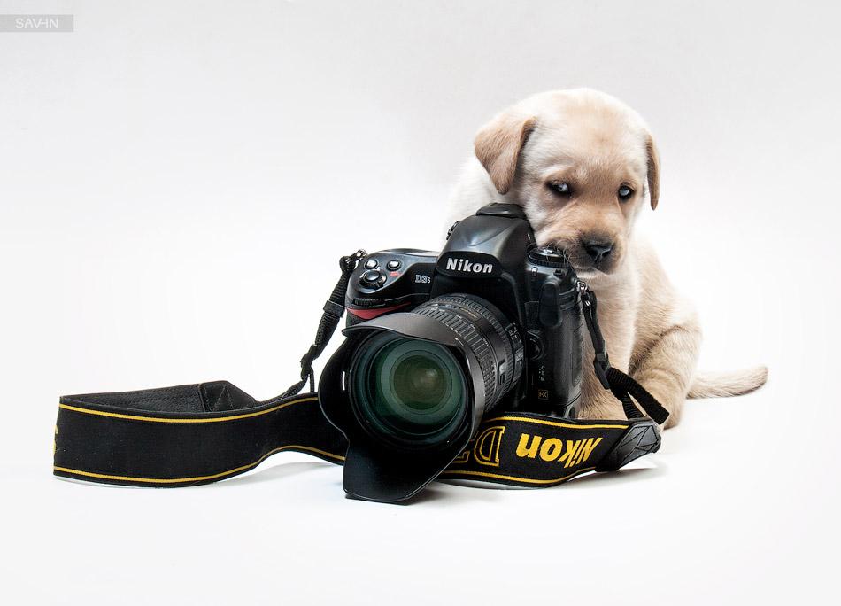 Выразить благодарность за фотографии фотографу