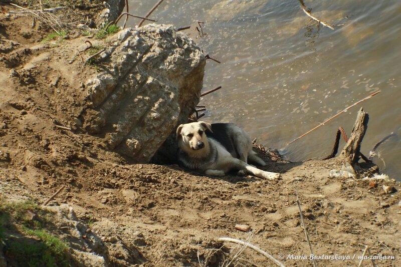 Добрый собакин, Саратов, Набережная Космонавтов, 02 мая 2014 года
