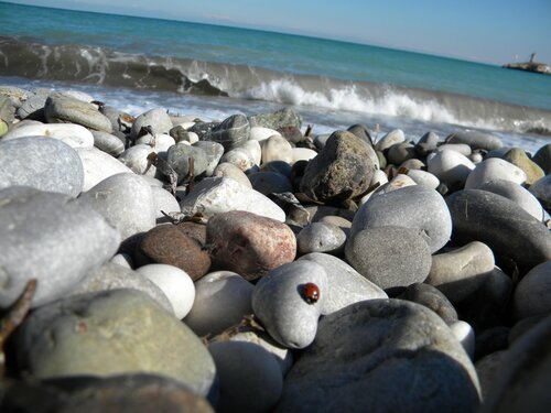 на камнях