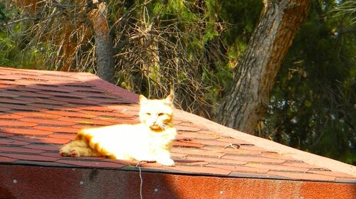 Кис на крыше
