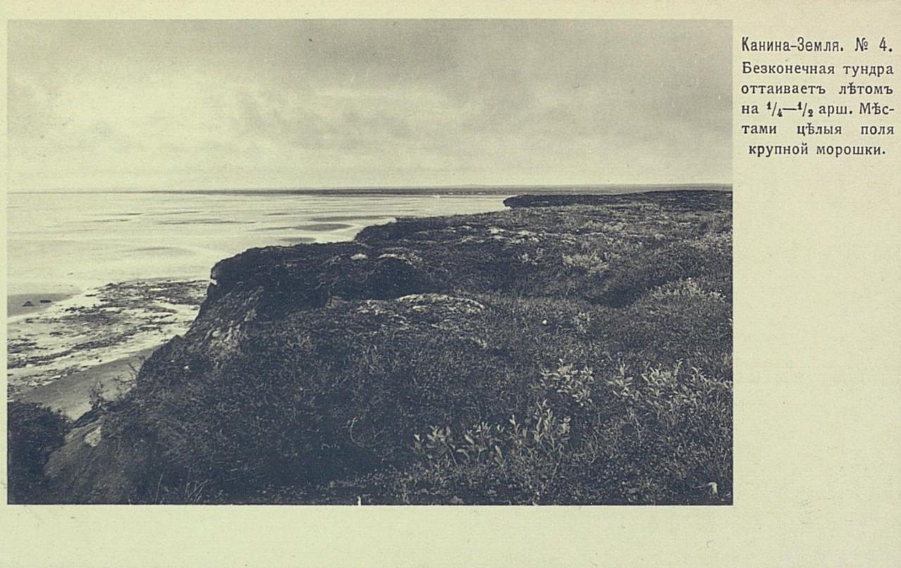 Канина-Земля. Бесконечная тундра оттаивает летом на 1.4 аршина. Местами целые поля крупной морошки