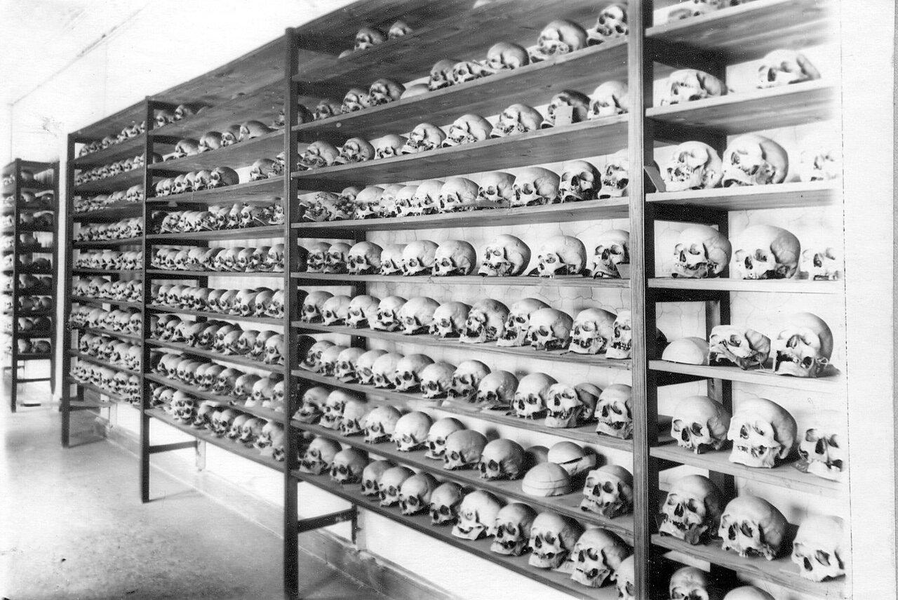 17. Вид коллекции черепов в музее кафедры оперативной хирургии с топографической анатомией