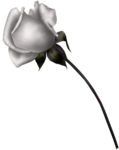 SD NP ROSE.png
