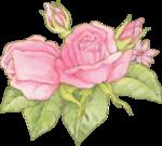 RosePinkJazzlScan_mc.png