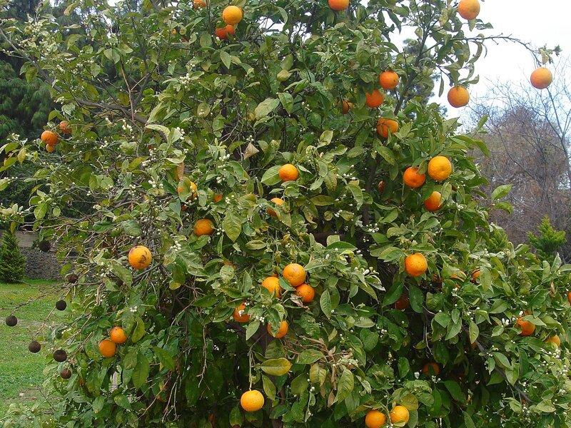 Святая Земля,весна,плодовые деревья