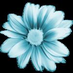 SD DM FLOWER 2.png