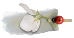 Spring_and_Love_el (28).png