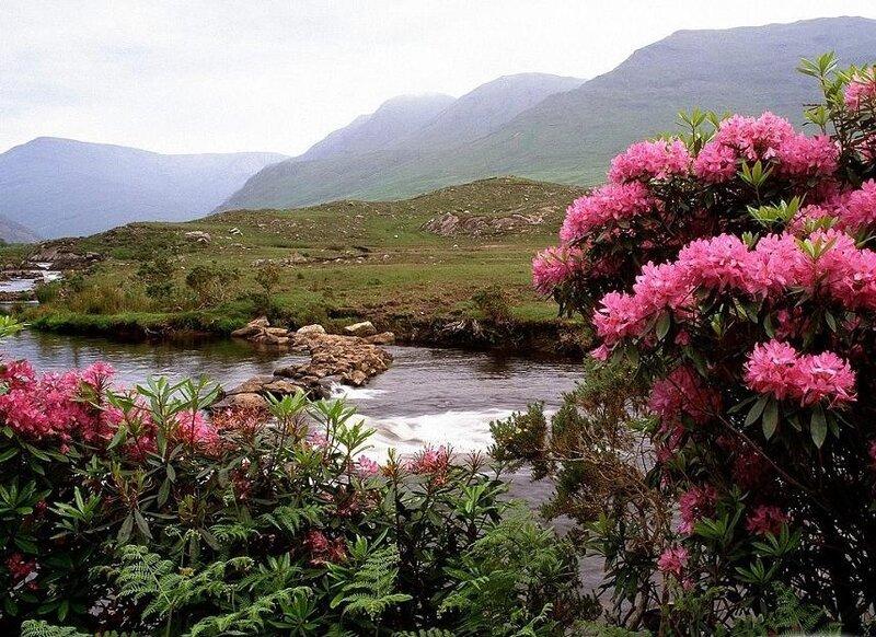 Кроме любительской верховой езды, в Ирландии.