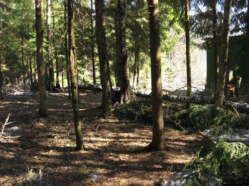 сломанные деревья