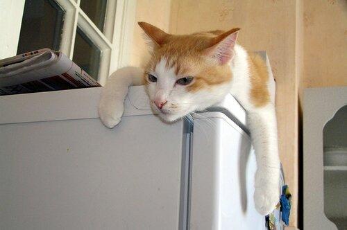 Феликс на любимом холодильнике