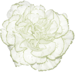 JanetB_HopesnDreams_flower1.png