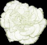 JanetB_HopesnDreams_flower1.png