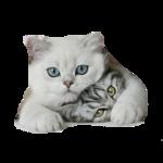 Кошки 5 0_50a24_987e5e53_S