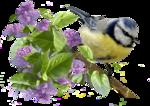 Птицы  разные  0_51c4b_ceec0477_S
