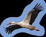 Птицы  разные  0_51c91_c6054968_S