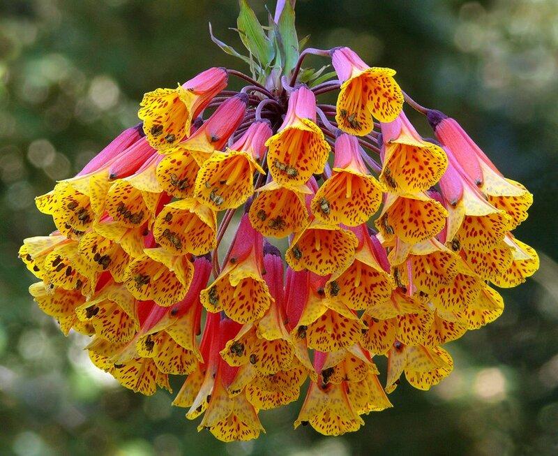 Особенно красивые цветы