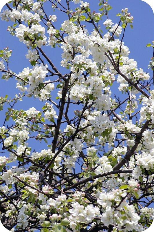 Приманка для весны