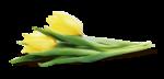 Lily_Spring_el25sh.png