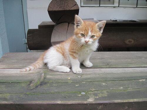 котенок в Одессе