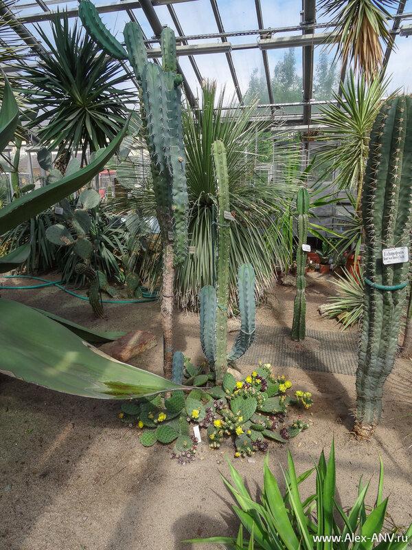 Количество разнообразный видов кактусов просто поражает.