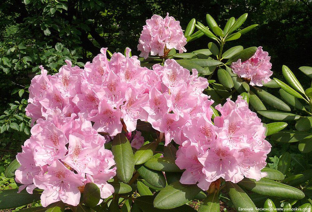 Весна. Аптекарский огород. 24.05.10.04...jpg